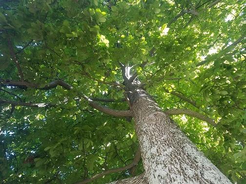 Tree Pic 4