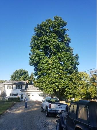 Tree Pic 6