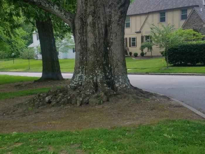 Root Photo